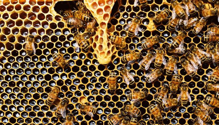 снятся-пчелы-во-сне
