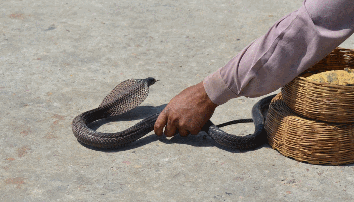 сон-о-борьбе-со-змеей