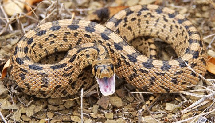 укусила-змея-во-сне