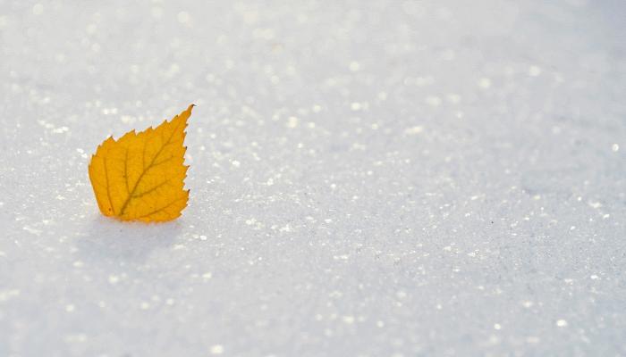 видеть-снег-во-сне