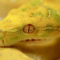 желтая-змея-во-сне
