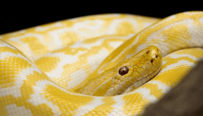 змея-снится-мужчине