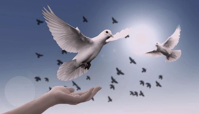 Увидеть голубя во сне - хороший или плохой знак?