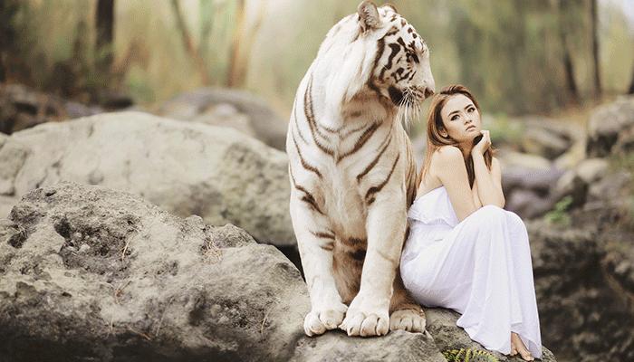 Чего ожидать, если приснился тигр - к радости или горю?
