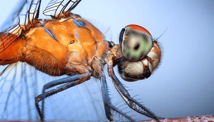 К чему снится стрекоза? Толкование сна