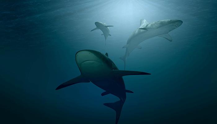 О чем предупреждает сон, в котором присутствует акула?