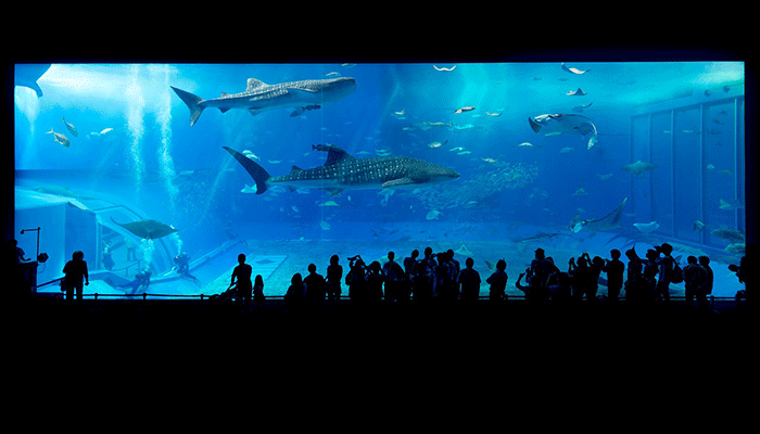 Разгадка сна об аквариуме — все трактовки известных медиумов
