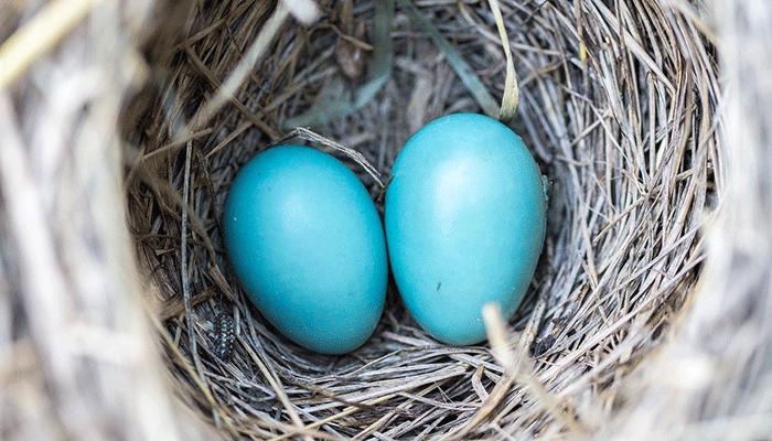 К чему снится гнездо - сонник