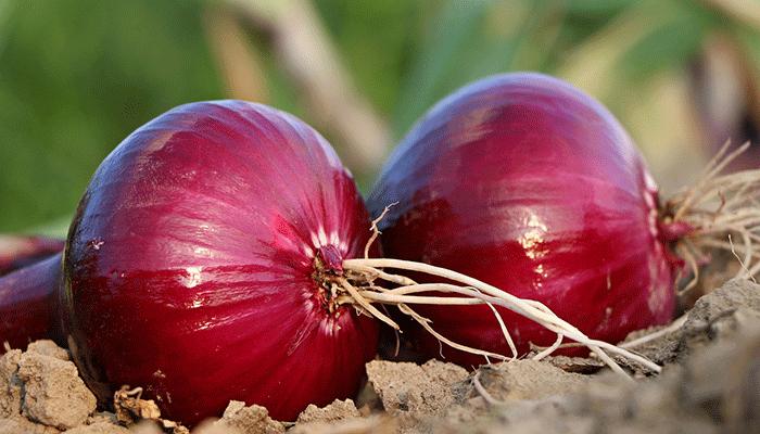 К чему снятся грядки и овощи на них?