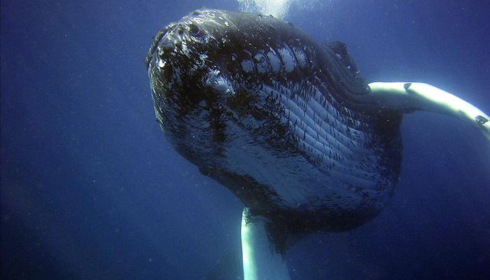 Зачем синий кит приплывает в сон к человеку?