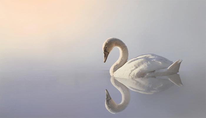 Сновидения, в которых вы увидели лебедей