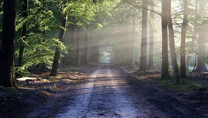 К чему снится лес — толкование по сонникам Ванги, Миллера и исламскому