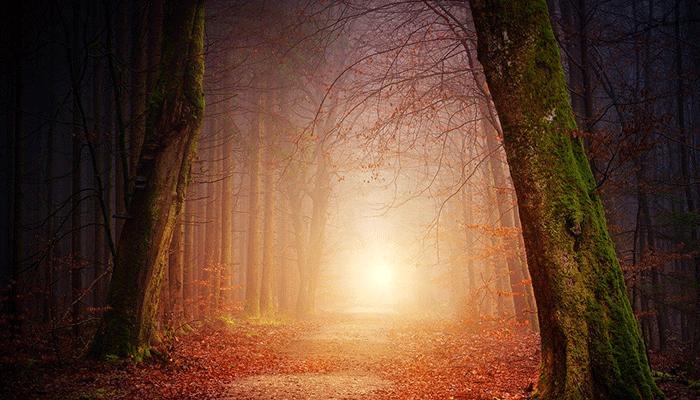 К чему снится лес - толкование по сонникам Ванги, Миллера и исламскому