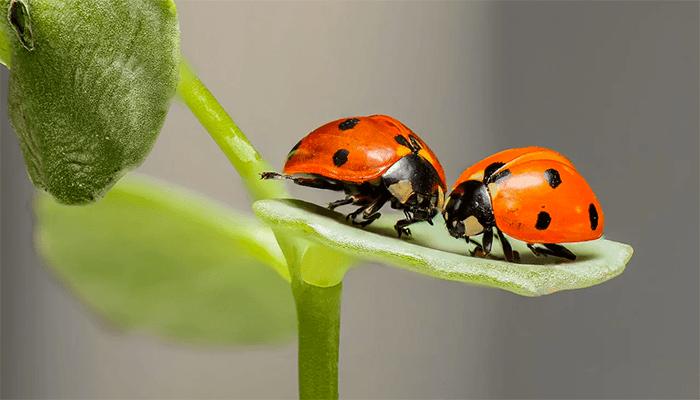 Что означает сон про насекомых?