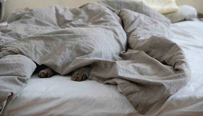Что значит сон, в котором вы увидели одеяло