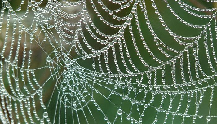 Если снится паутина — чего ожидать? Толкование по сонникам