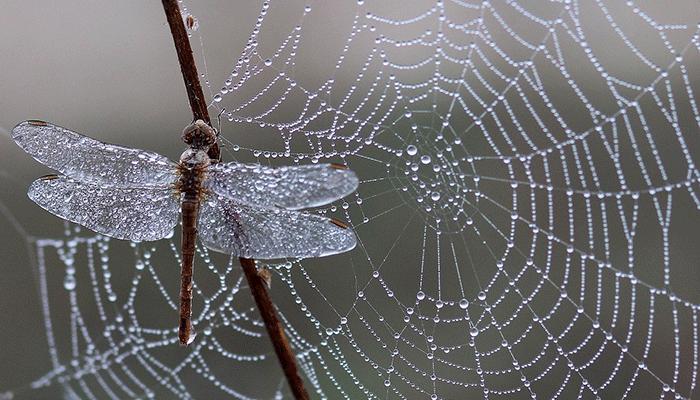 Если снится паутина - чего ожидать? Толкование по сонникам
