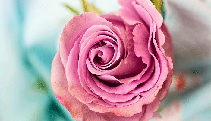 Что значит сон, в котором вы увидели розу