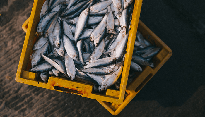 Сон про рыбалку - к чему бы это?
