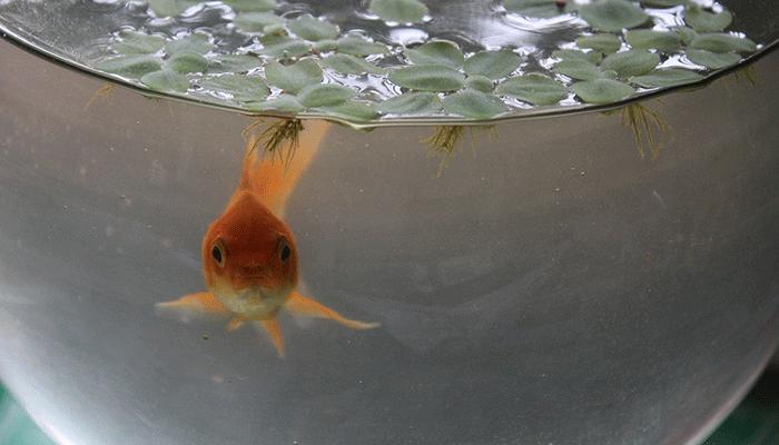 Рыбки в аквариуме - исполнение желаний или предупреждение?