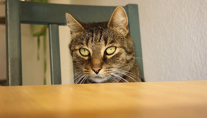 Ночное застолье: к чему снится сидеть за столом?