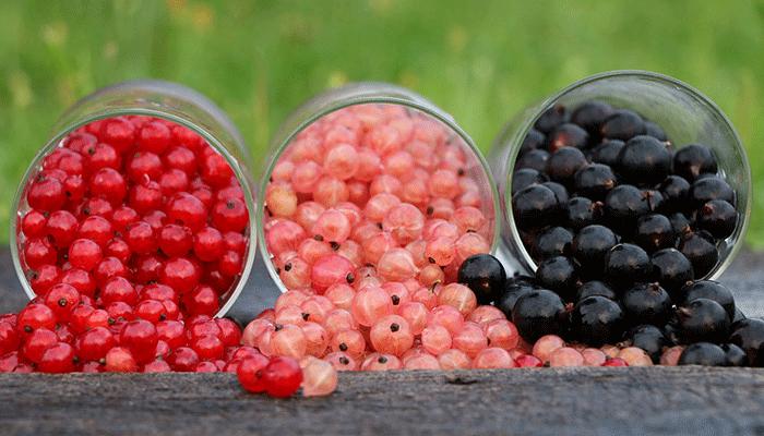 К чему снится смородина: тайные знаки витаминной ягоды