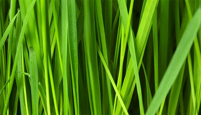 Видеть во сне траву: толкования сновидения