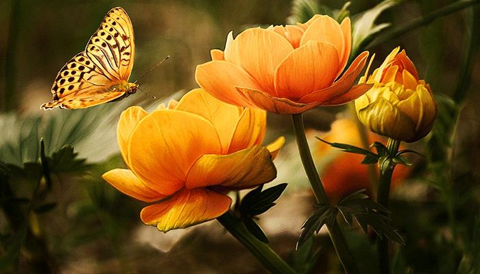 О чем предупреждают цветы, увиденные во сне