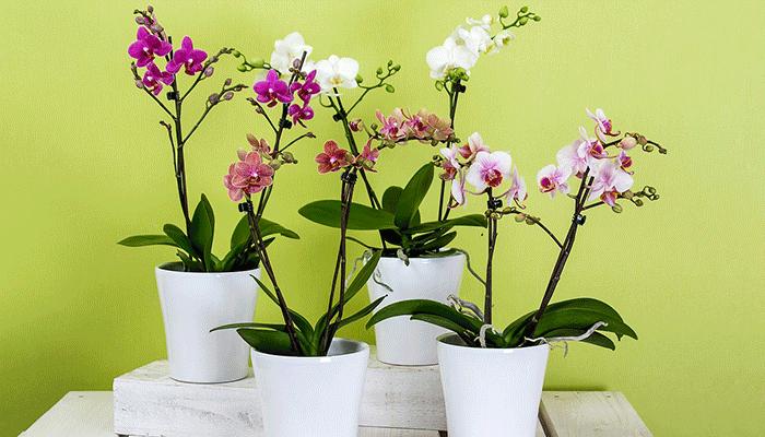 К чему снятся цветы в горшках - толкование по популярным сонникам