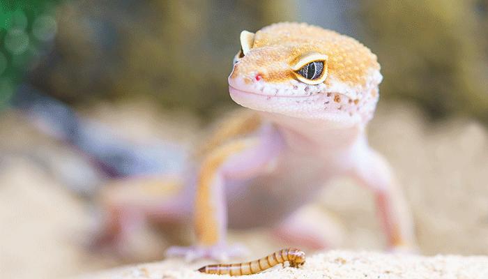 К чему снится ящерица: такая же ли она ядовитая, как и наяву?