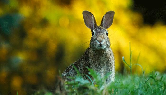 О чем говорит сон, в котором вы увидели зайца