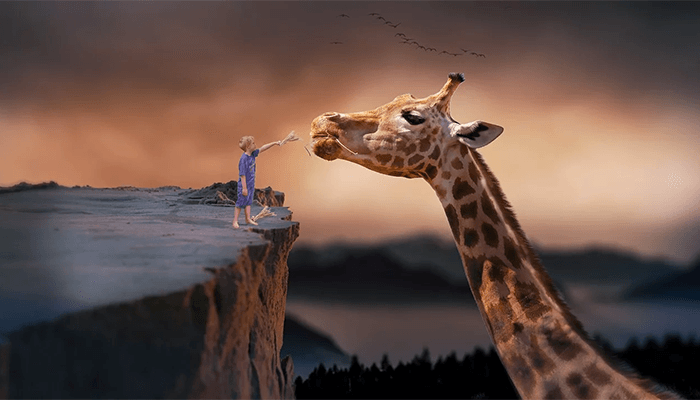 Почему вам приснился жираф: толкование сна