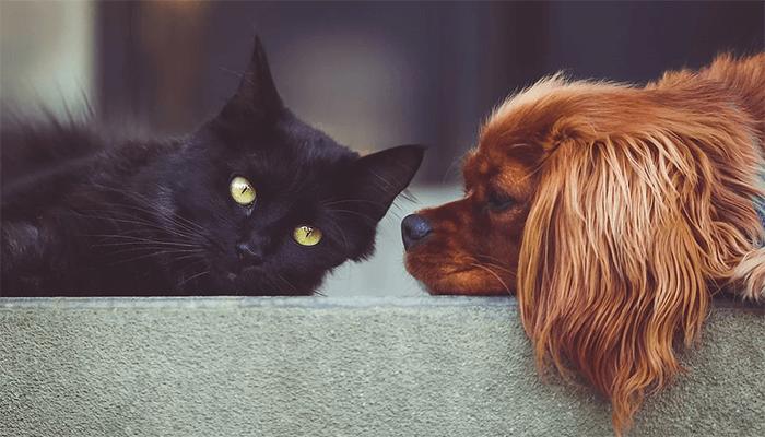 Что сулят животные, привидевшиеся во сне?